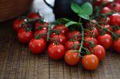 Cherry Tomatoes On Stalks
