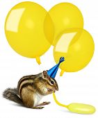 Funny chipmunk inflating yellow balloons