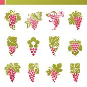 Red Grape With Green Leaf. Vector elements For Design.