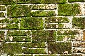 Mofo em uma parede de tijolo de pedra