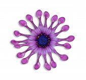 Herberos soprano colher lilás