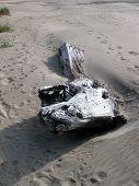 image of divergent  - Sandy footprints diverge around a large piece of drift wood on an Oregon beach - JPG
