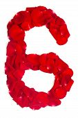 stock photo of six-petaled  - Alphabet number 6 made from red petals rose isolated on a white background - JPG