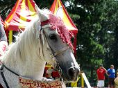stock photo of jousting  - A closeup frontal view of a beautiful white horse head in costume for the renaissance festival joust - JPG