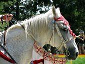 White Horse Head In Costume