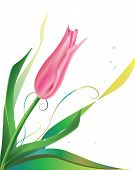 One pink tulip