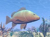 Mangrove Fish Underwater - 3D Render