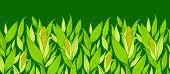 Frontera de maíz plantas patrón horizontal transparente fondo