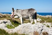 picture of headstrong  - View of Donkey next in the Spanish countryside - JPG