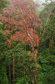 Rainforest View