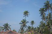 Slanting Rooftops in Sri Lanka