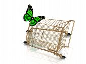 Big Green Butterfly Flew To The Basket