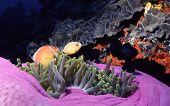 Mother Ocean's Colors