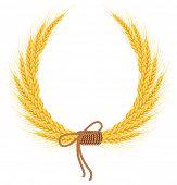Ears of wheat. Rasterized illustration