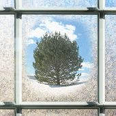 Frosted Square Winter Window Glass With Pine Tree Outside