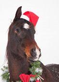 Adorable dark bay Arabian horse with a Santa hat and  Christmas wreath