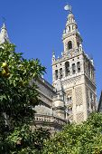 Giralda Tower, The Belfry Of The Cathedral Of Sevilla