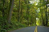 Scenic Oregon Road