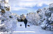 Schlendern Sie durch winterliche