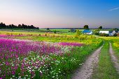 stock photo of farm land  - summer rural landscape with a blossoming meadow the road and a farm - JPG