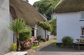 image of english cottage garden  - Thatched cottages at Hope Cove - JPG
