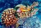 Amazing undersea nature, beautiful colorful coral garden and clownfish between it, beauty of exotic