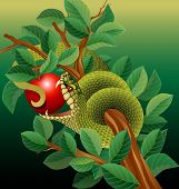 picture of tree snake  - snake in tree biting red apple - JPG
