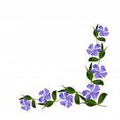 Periwinkle Flowers Line In A Corner