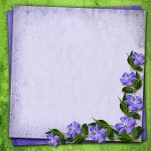 Periwinkle Flowers Corner