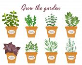 foto of oregano  - Set of vector culinary herbs in pots with labels with fresh oregano  rocket  thyme  bay  basil  rosemary  parsley and sage with text above  - JPG