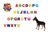 Alphabet  And  Toy-terrier Puppy On White Background.