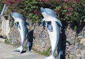 dolphin phone