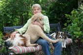 picture of standard poodle  - A ninety year - JPG