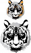 two tigers