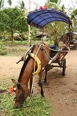stock photo of horse plowing  - Horse with a vintage cart in a Vietnamese countryside - JPG