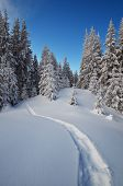 Trail in the snow. Winter forest with snowdrifts. Christmas landscape