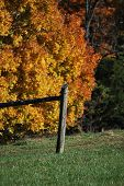 Wooden fence with fall backdrop