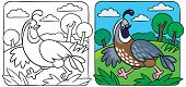 Little Quail Coloring Book