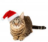 image of mew  - Cat in Santa Claus hat isolated on white - JPG