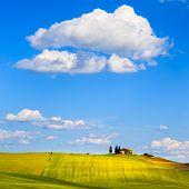 Tuscany, Farmland And Cypress Trees, Green Fields. Pienza, Italy.