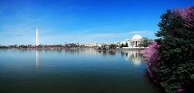 pic of cherry blossoms  - Washington DC panorama with Washington monument and Thomas Jefferson memorial with cherry blossom - JPG