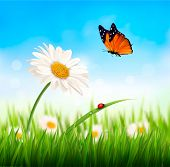 image of daisy flower  - Nature spring daisy flower with butterfly - JPG