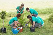 image of environment-friendly  - Happy friends gardening for the community on a sunny day - JPG