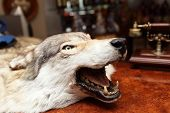 stock photo of stuffed animals  - Head of a stuffed wolf on a table - JPG