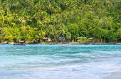 picture of siamese  - Tropical forest - JPG