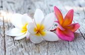 picture of plumeria flower  - close up of beautiful plumeria flower on wooden background - JPG