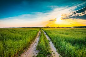 pic of sunny season  - Sunset over rural dirty  countryside road in green wheat field - JPG