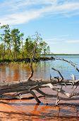 Dry Tree  On Lake