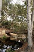 Woodsy Foot Bridge
