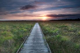 foto of marshes  - wooden path on marsh and summer sunset - JPG